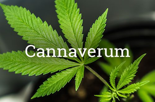 Cannaverum EN